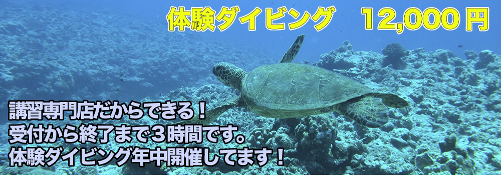 伊豆大島で体験ダイビングおひとりさまから